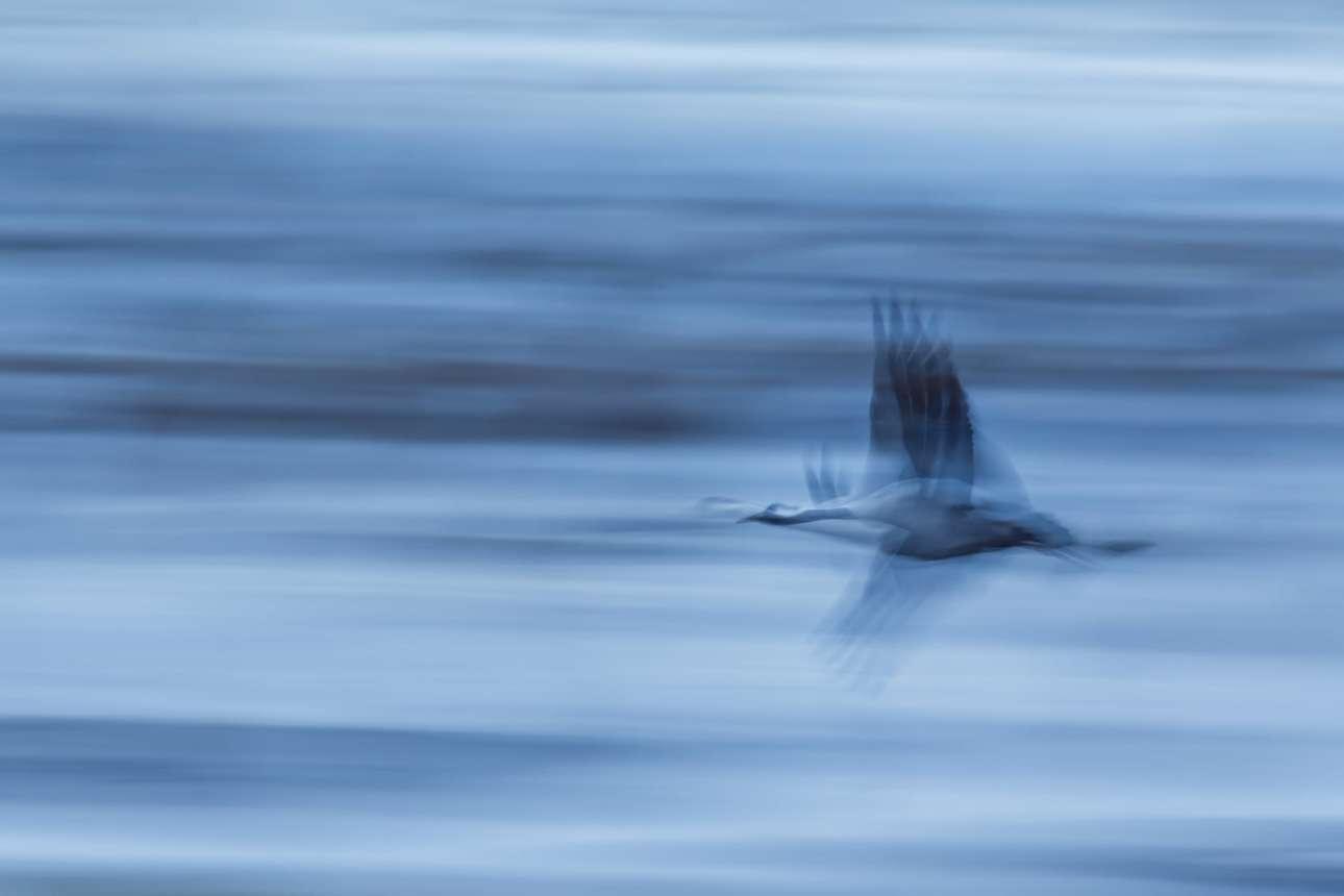 Βραβείο στην κατηγορία «Πορτφόλιο». Ατμοσφαιρική λήψη ενός πελαργού την ώρα που πετάει πάνω από την λίμνη Hornborga στη Σουηδία