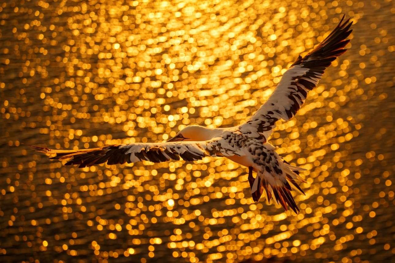 Βραβείο στην κατηγορία «Πορτφόλιο». Πτήση πάνω από τα χρυσαφένια νερά του νησιού Χέλγκολαντ της Γερμανίας
