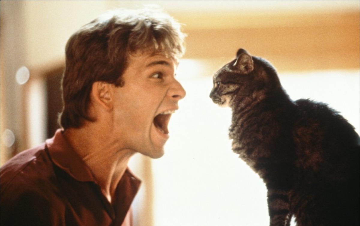 O Πάτρικ Σουέιζι στο «Ghost» (1990) του Τζέρι Ζούκερ. Ο τρόπος για να κατανοήσει ο θεατής την αδυναμία του νεκρού πρωταγωνιστήσει με τον έξω κόσμο δίνεται μέσω μιας γάτας που υποτίθεται ότι αντιλαμβάνεται πολλά περισσότερα από εμάς