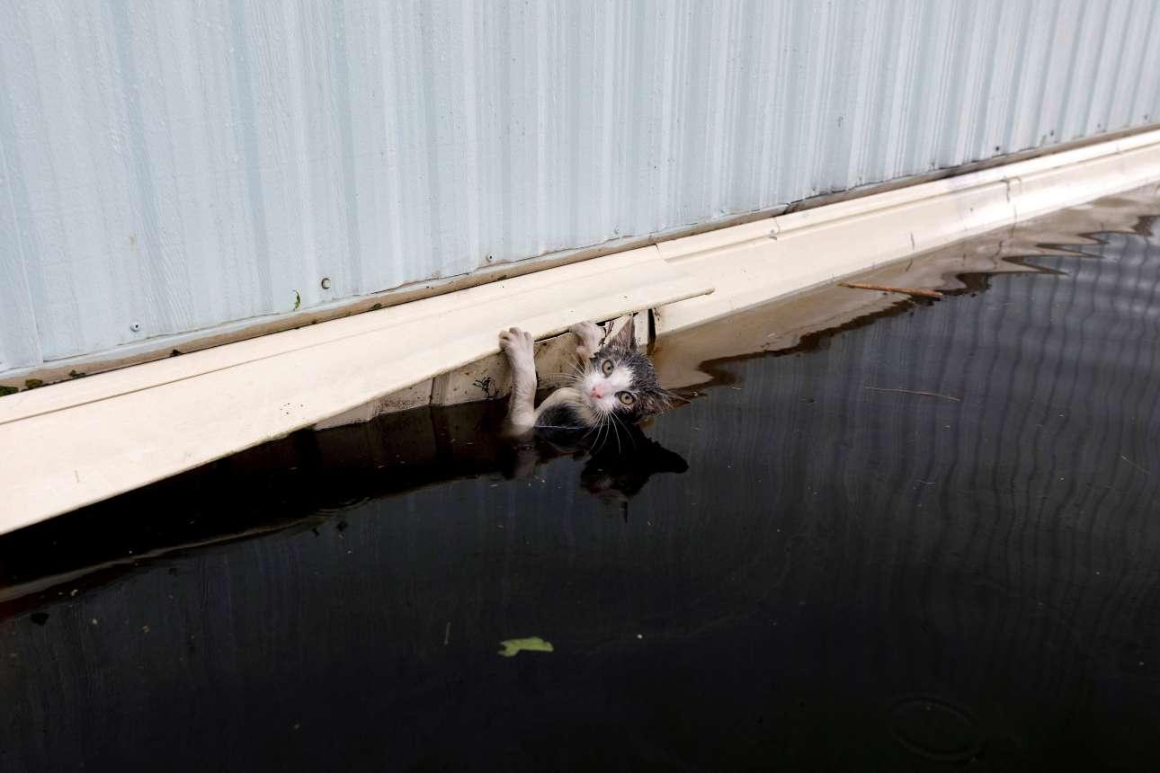 Τρίτη, 18 Σεπτεμβρίου, ΗΠΑ. Μία γατούλα πασχίζει να κρατηθεί από από την άκρη ενός τροχόσπιτου ενώ ο τυφώνας Φλόρενς έχει πλήξει την Βόρεια Καρολίνα