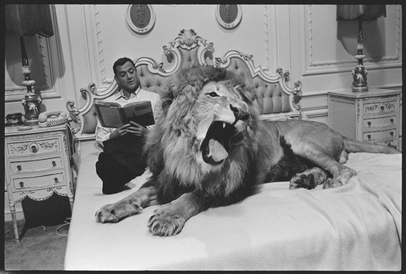 Ο διάσημος ηθοποιός Τόνι Ράνταλ χαλαρώνει με το λιοντάρι Ζάμπα στα γυρίσματα της κωμωδίας «Fluffy, το 1965