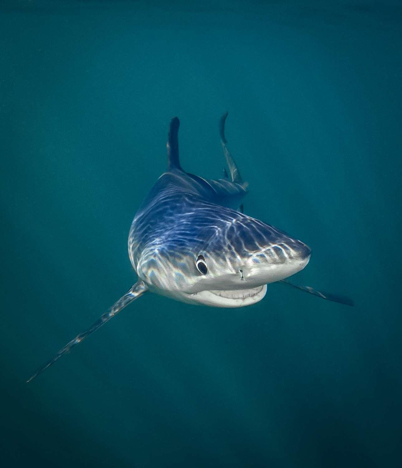 Καρχαρίας χαμογελάει στην κάμερα