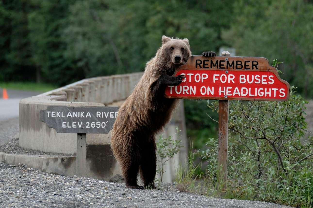 Ενω μία άλλη προσέχει για την ασφάλεια των οδηγών στην Αλάσκα