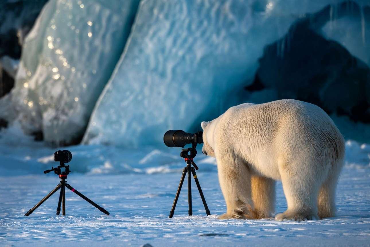 Οι ρόλοι αντιστράφηκαν και η πολική αρκούδα στο Σβάλμπαρντ στη Νορβηγία αποφάσισε να δοκιμάσει το ταλέντο της στη φωτογραφία