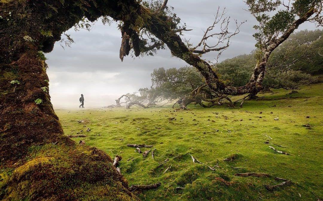Βραβείο στην κατηγορία Τοπίο. Δάσος τυλιγμένο στην ομίχλη που θυμίζει σκηνικό από την ταινία «ο Αρχοντας των Δαχτυλιδιών», στη Μαδέρα της Πορτογαλίας