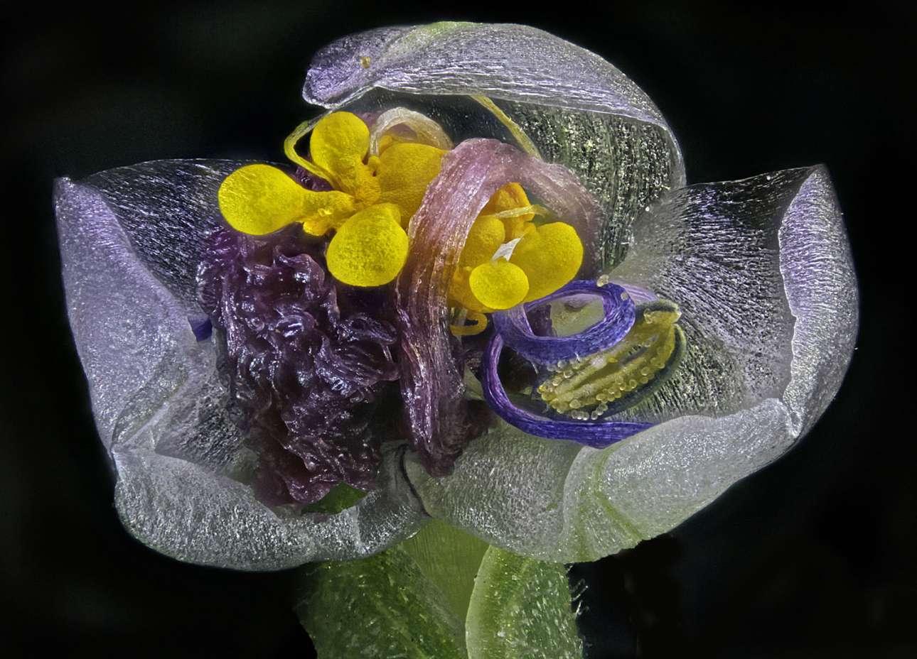 Τιμητική διάκριση: Ενα μαραμένο λουλούδι μεγεθυσμένο τέσσερις φορές παραμένει όμορφο ωστόσο με έναν παράξενο τρόπο