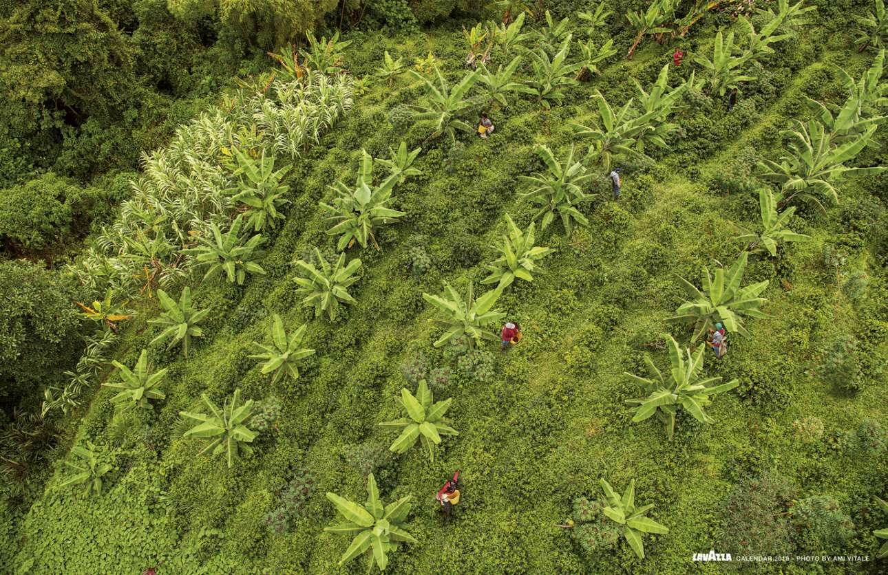 Μετά από χρόνια ένοπλων συγκρούσεων και εξάπλωση της παράνομης γεωργίας στην Κολομβία, τα χωράφια ανθίζουν πάλι με τη βοήθεια ενός πρότζεκτ του Ιδρύματος Giuseppe και Pericle Lavazza. Στόχος είναι η ανάπτυξη βιώσιμων καλλιεργειών, εκπαιδεύοντας τις τοπικές κοινότητες να χρησιμοποιούν νέες μεθόδους και παρέχοντας πρόσβαση στο Διαδίκτυο