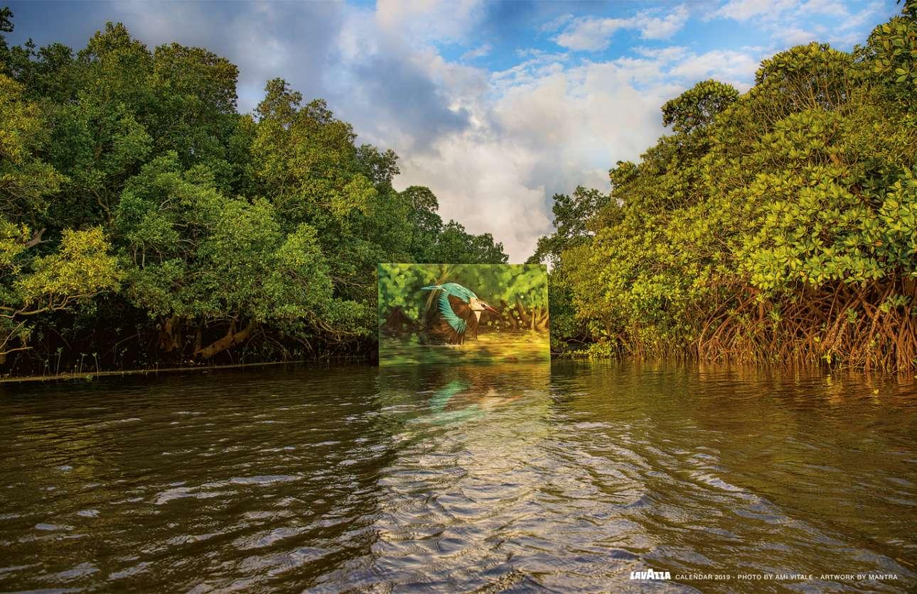 Στην Κένυα, ένας μεγάλος καμβάς δεμένος πάνω σε μία σχεδία που πλέει στον κόλπο Γκάζι δίνει την εντύπωση ότι τα μανγκρόβια και η αλκυόνα που αποτυπώνονται στον πίνακα εναρμονίζονται απόλυτα με την υδάτινη πανίδα και το φύλλωμα του δάσους