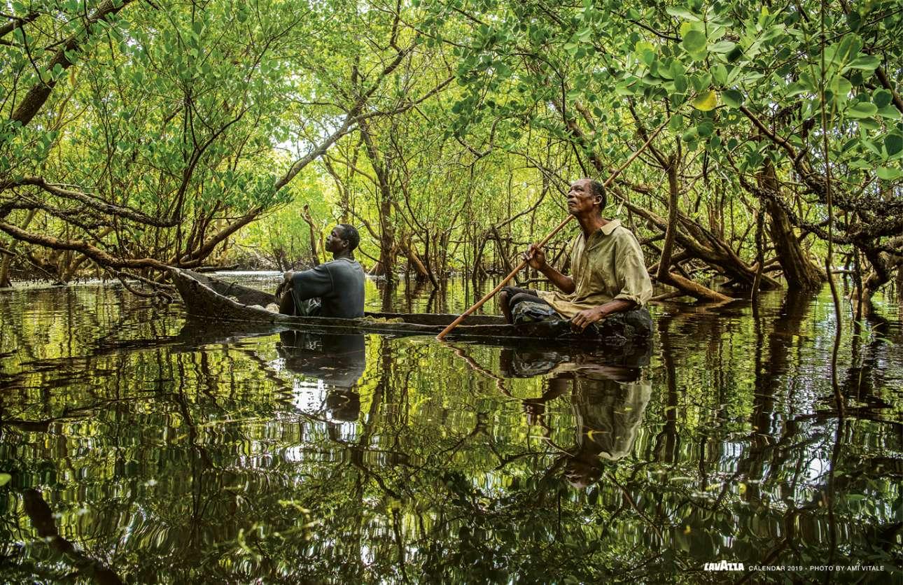 H οργάνωση Mikoko Pamoja φυτεύει κάθε χρόνο 4.000 νέα μαγκρόβια στο Γκάζι, τα οποία προστατεύουν τις παράκτιες κοινότητες από πλημμύρες και τσουνάμι και παράλληλα λειτουργούν ως φυσικό φίλτρο άνθρακα, παγιδεύοντας το διοξείδιο του άνθρακα που υπάρχει στον αέρα. Τώρα που τα δάση του Γκάζι έχουν αρχίσει ξανά να πυκνώνουν, πολλά υδρόβια ζώα έχουν βρει τον ιδανικό βιότοπο τους