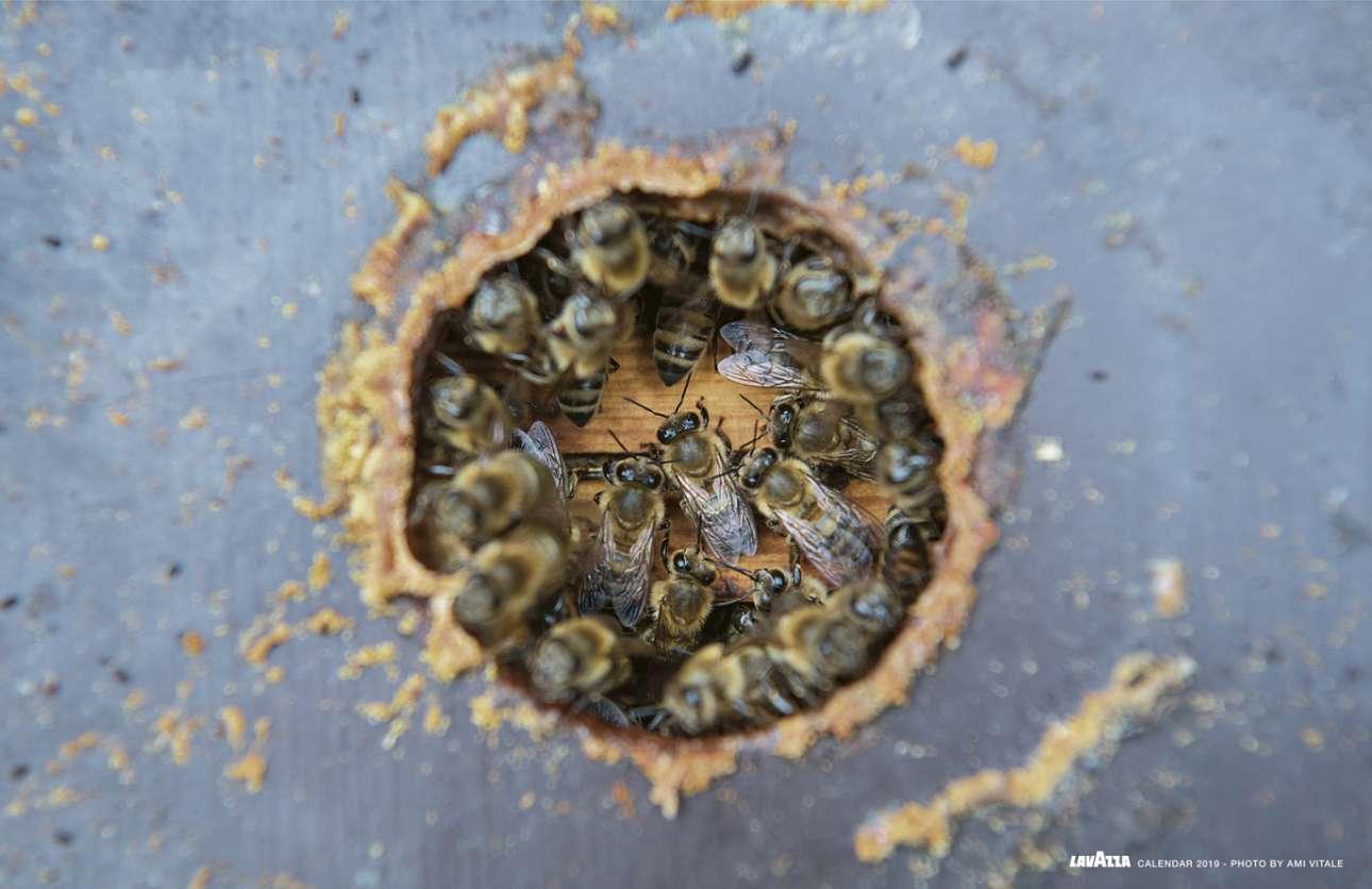 Η εγκαταλειμμένη βιομηχανική περιοχή της Γκενκ έχει μετατραπεί σε 69 νέους κήπους όπου άνθρωποι συναντιούνται και καλλιεργούν βιολογικά τρόφιμα. Επειτα από τις προσπάθειες των κατοίκων της περιοχής, έχουν δημιουργηθεί οι ιδανικές συνθήκες για να ευδοκιμήσουν οι μέλισσες