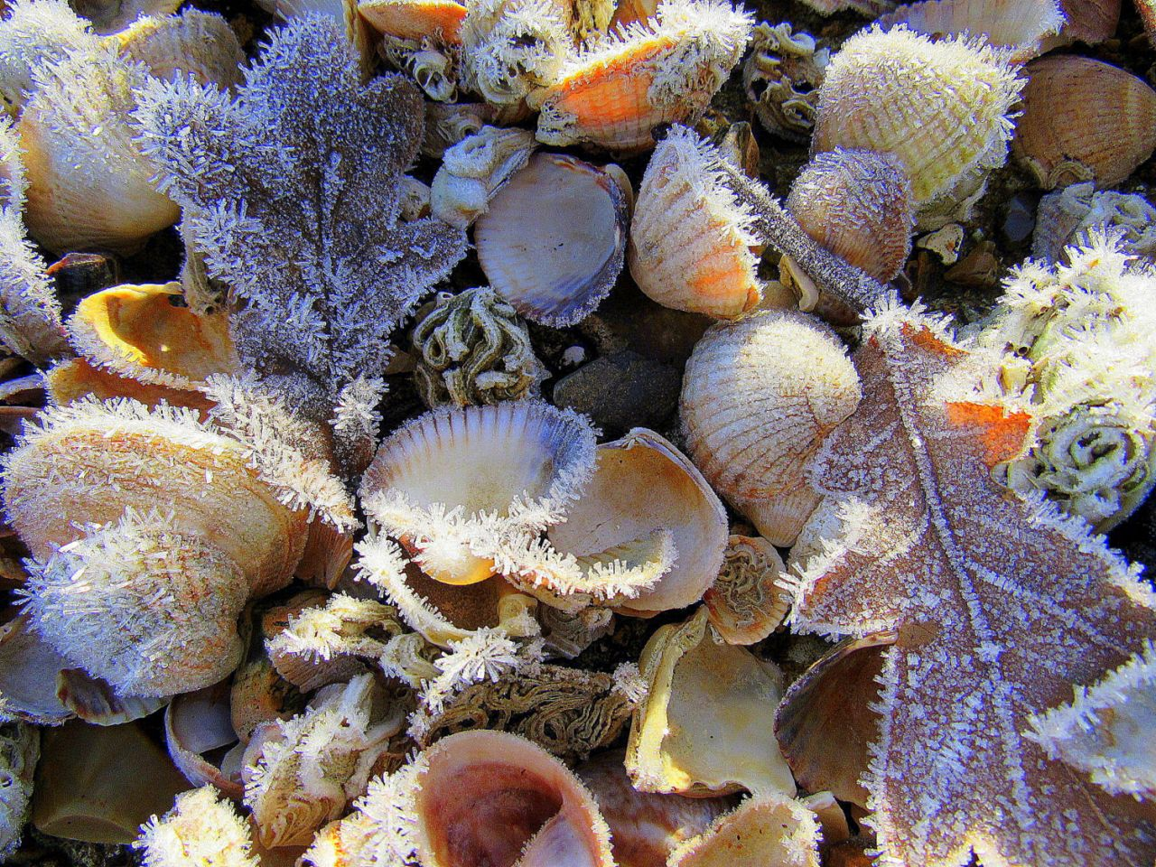 Λεπτό στρώμα πάγου πάνω σε κοχύλια και φύλλα, στην ακτή του Σαουθάμπτον Γουότερ στο Χαμπσάιρ