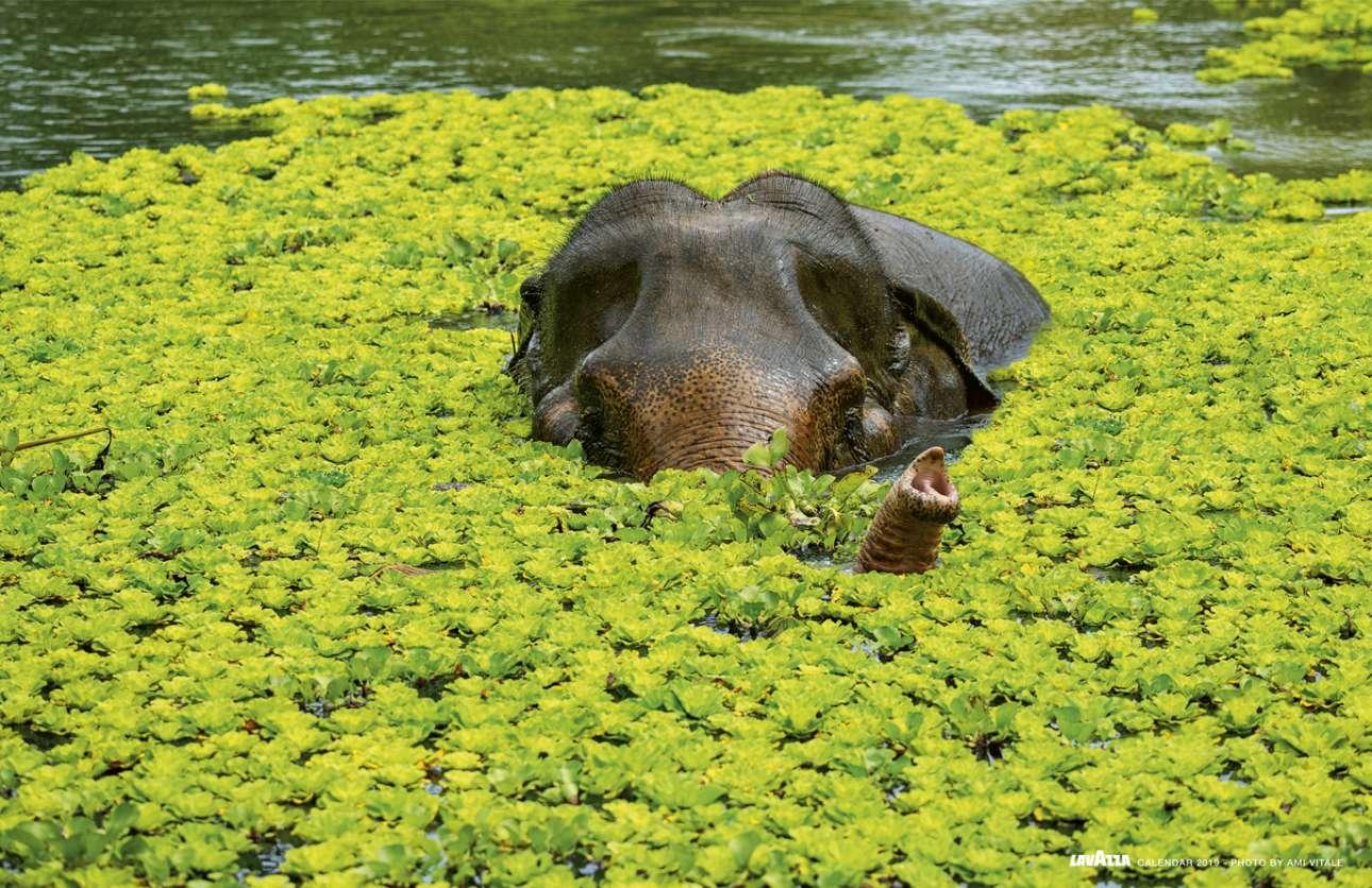 Το Iδρυμα Φίλων της Aγριας Ζωής της Ταϊλάνδης και άλλες οργανώσεις έχουν αναζωογονήσει υποβαθμισμένες δασικές εκτάσεις, δημιουργώντας έναν τέλειο βιότοπο κυρίως για τους γίββωνες, αλλά και για ελέφαντες και για πολλά άλλα είδη