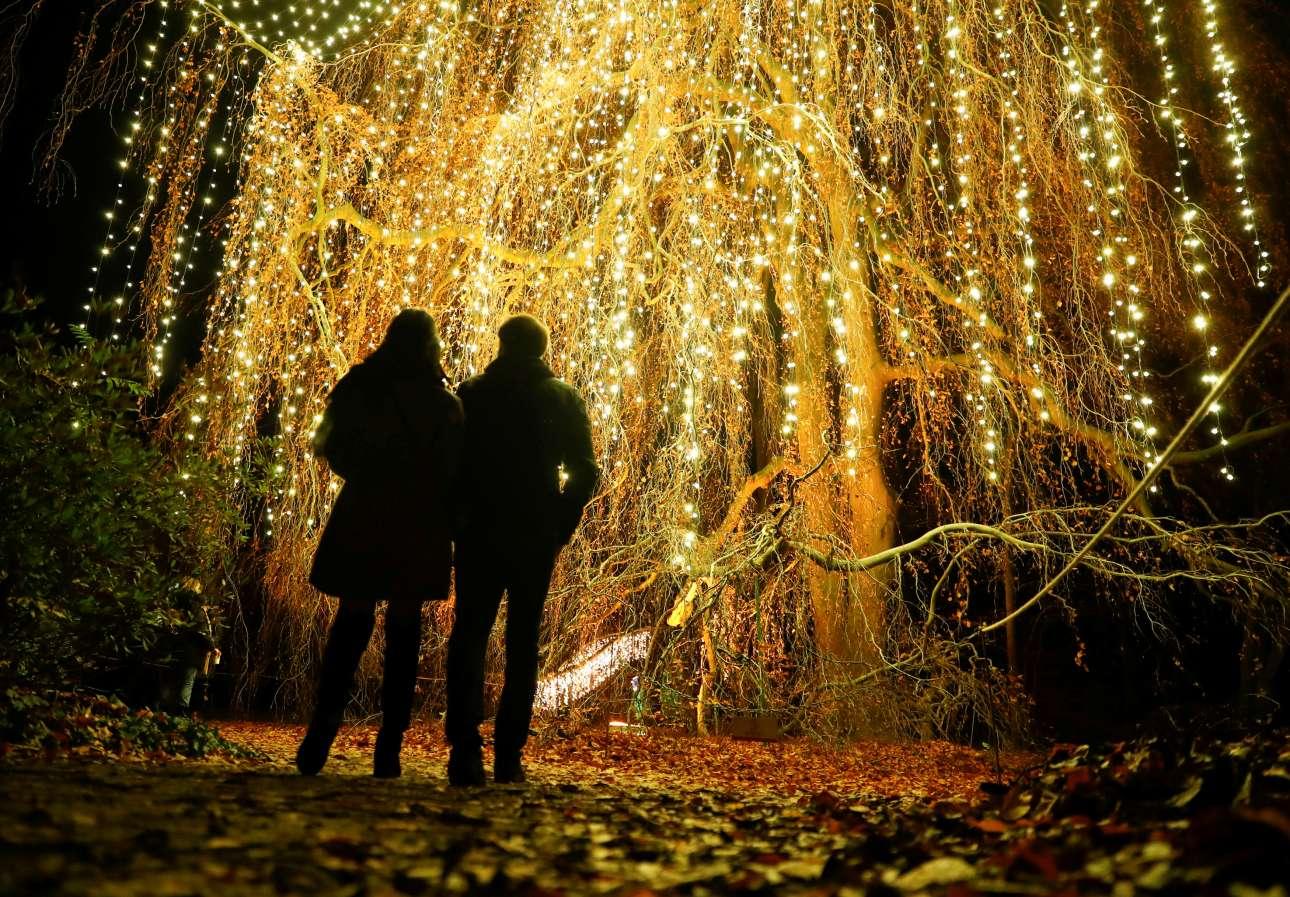 Παρασκευή, 16 Νοεμβρίου, Γερμανία. Αρωμα Χριστουγέννων. Ζευγάρι στέκεται μπροστά σε στολισμένο δέντρο στον βοτανικό κήπο του Βερολίνου