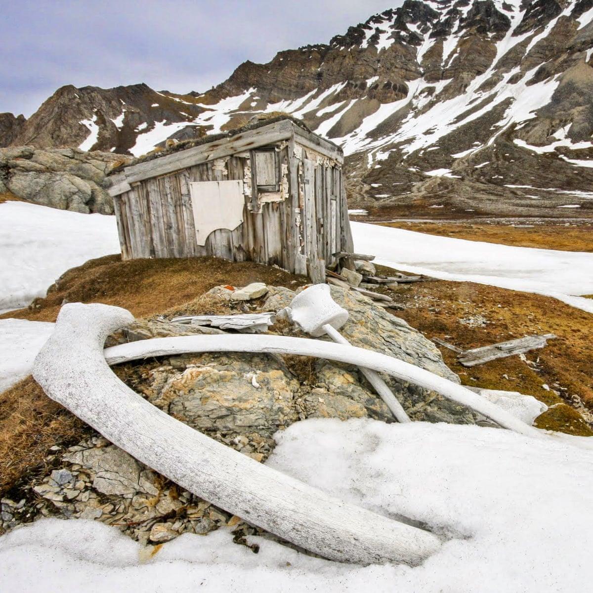 Από τον 17ο αιώνα, η φαλαινοθηρία για το λίπος και το πετρέλαιο ήταν ευρέως διαδεδομένη στο Σβάλμπαρντ της Νορβηγίας. Λόγω των χαμηλών θερμοκρασιών, μερικές καλύβες της εποχής έχουν παραμείνει άθικτες και προστατεύονται πλέον ως μνημεία, όπως η παραπάνω καλύβα στο εξωτερικό της οποίας διακρίνονται οστά φάλαινας