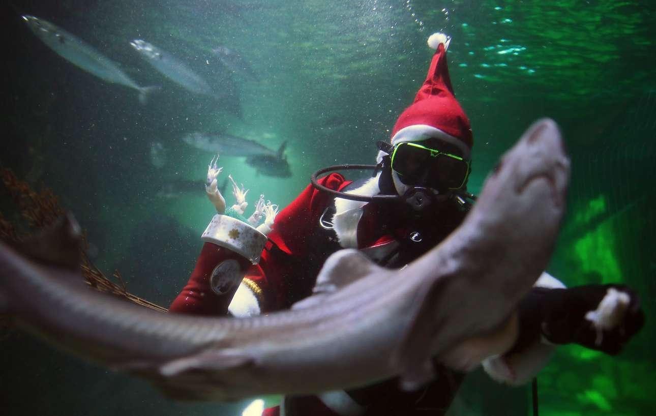 Τρίτη, 4 Δεκεμβρίου, Γερμανία. Δύτης ντυμένος Αγιος Βασίλης ταΐζει τα ψάρια στο ενυδρείο Sea Life του Βερολίνου