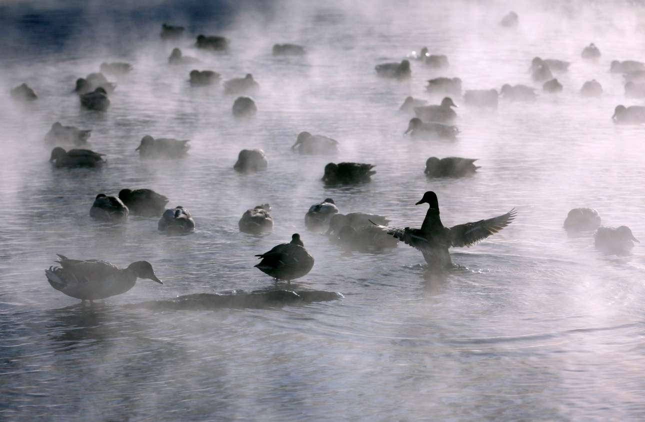 Τετάρτη, 5 Δεκεμβρίου, Ρωσία. Αγριες πάπιες διακρίνονται να κολυμπούν στον ποταμό Γενισέι, κοντά στο Κρασνογιάρσκ, με τις θερμοκρασίες να αγγίζουν τους -30 βαθμούς Κελσίου