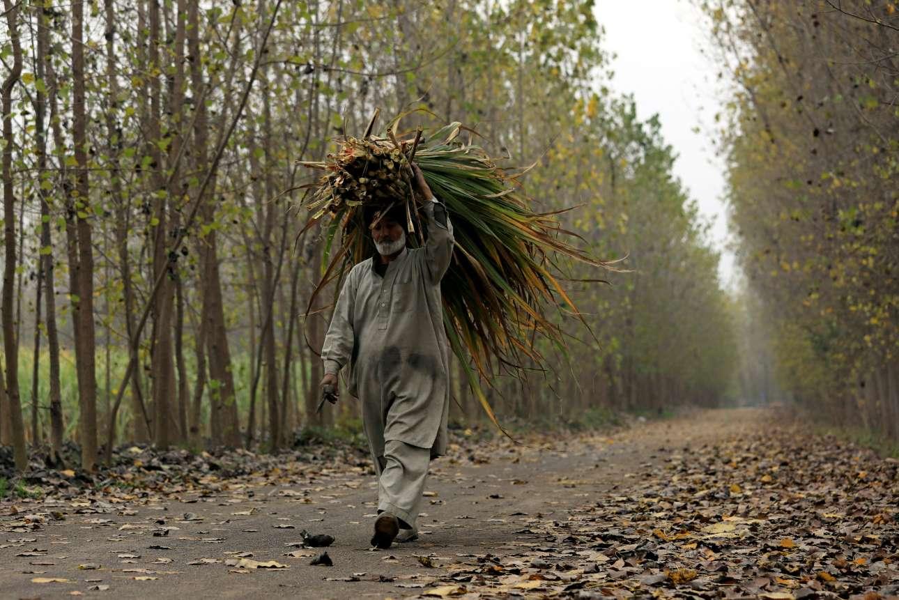 Τρίτη, 11 Δεκεμβρίου, Πακιστάν. Ανδρας κουβαλάει χόρτα σε δρόμο της Πεσαβάρ