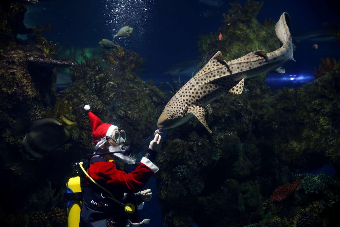 Τετάρτη, 12 Δεκεμβρίου, Μάλτα. Προσαρμοζόμενο στην εορταστική ατμόσφαιρα της περιόδου, το Εθνικό Ενυδρείο της Μάλτας παρουσιάζει δύτη ντυμένο Άγιο Βασίλη να ταΐζει καρχαρία (!), το δέρμα του οποίου μοιάζει με αυτό της ζέβρας