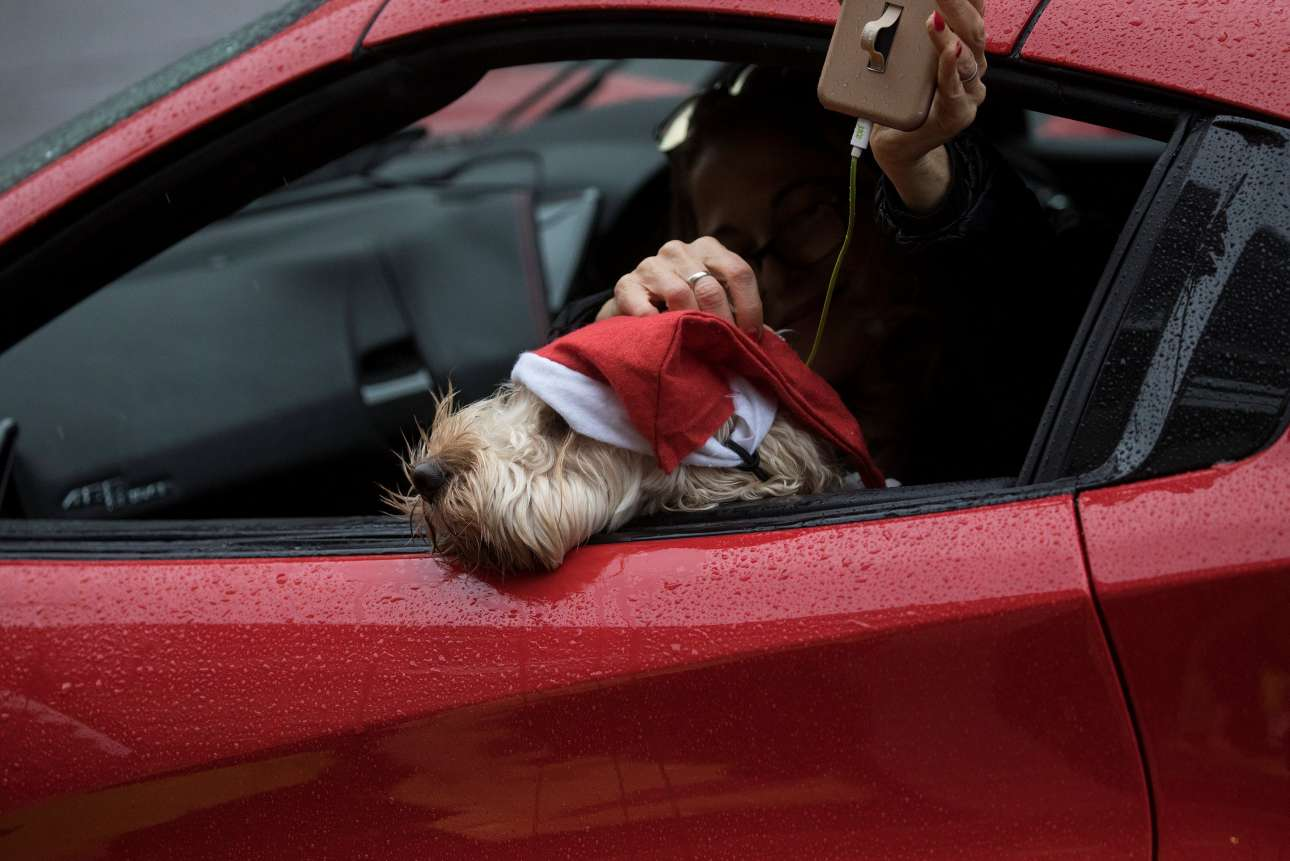 Ενα χαριτωμένο σκυλάκι με σκούφο Αϊ Βασίλη απολαμβάνει την βόλτα του στη διάσημη Oxford Street του Λονδίνου