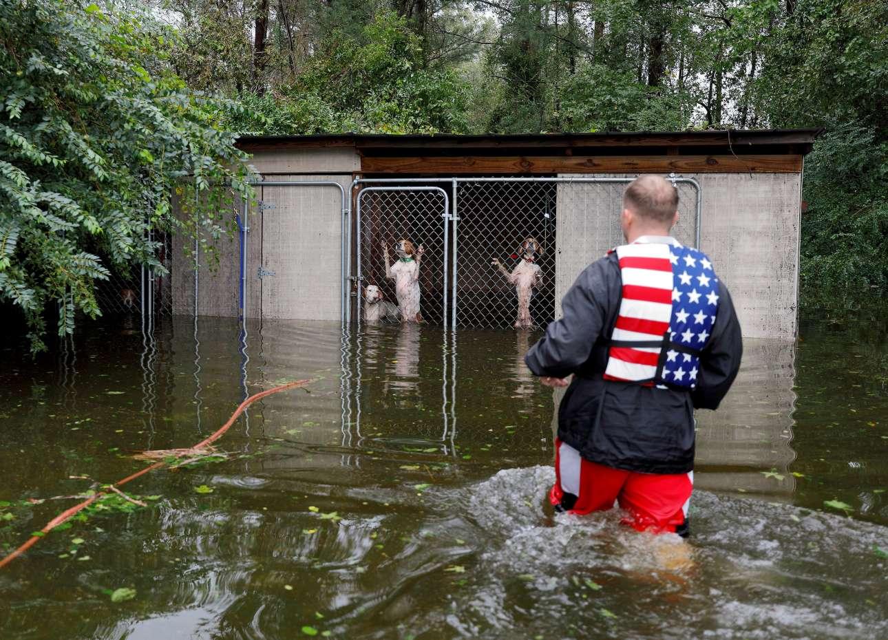 16 Σεπτεμβρίoυ. Εθελοντής διασώστης πηγαίνει να απεγκλωβίσει φοβισμένα σκυλιά που τα παράτησε ο ιδιοκτήτης τους προσπαθώντας να ξεφύγει από τον τυφώνα Φλόρενς, στη Βόρεια Καρολίνα των ΗΠΑ