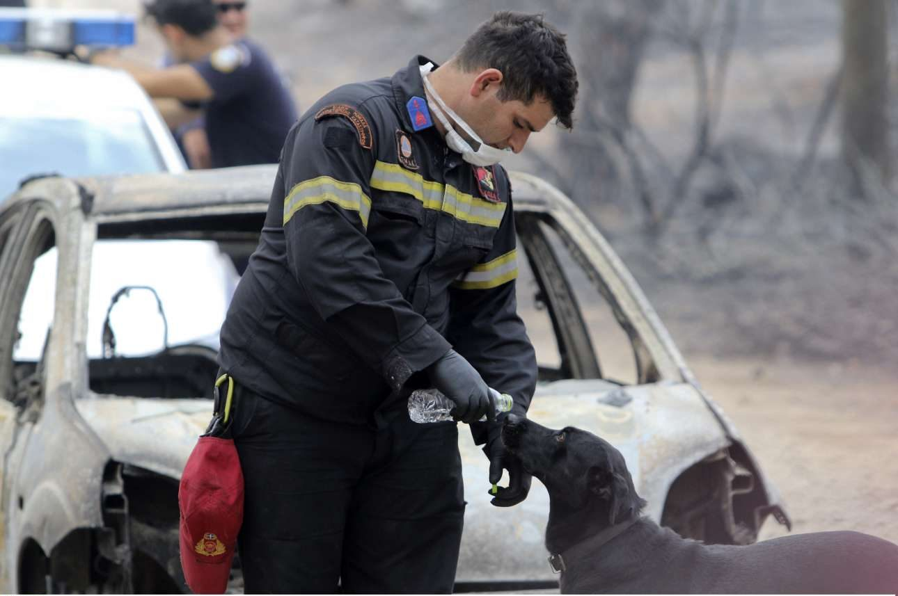 24 Ιουλίου. Ενας κατάκοπος πυροσβέστης δίνει νερό σε σκύλο, μία ημέρα μετά τη φονική πυρκαγιά στο Μάτι