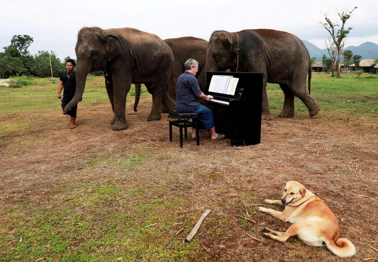 Κυριακή, 9 Δεκεμβρίου, Ταϊλάνδη. Ο εθελοντής Πολ Μπάρτον παίζει πιάνο καταμεσής στο καταφύγιο του Καχαναμπούρι στα σύνορα Ταϊλάνδης - Μιανμάρ. Οι νότες κάνουν καλό στους ελέφαντες του καταφυγίου που έχουν διασωθεί και είναι γερασμένοι και κακοποιημένοι. Ο σκύλος το απολαμβάνει και αυτός...