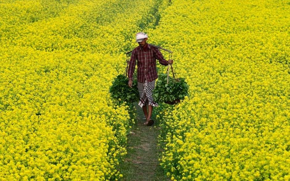 Πέμπτη, 27 Δεκεμβρίου, Ινδία. Αγρότης μεταφέρει λαχανικά σε αγρό έξω από το Γουβαχάτι