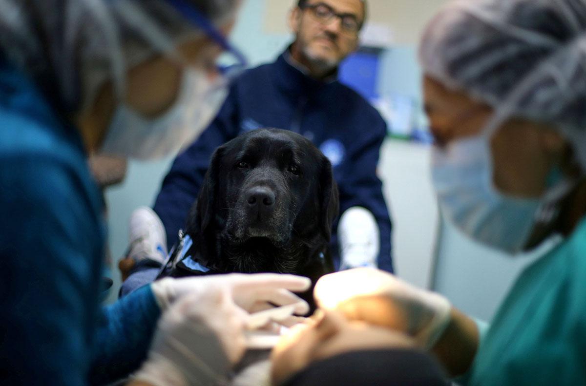 8 Μαΐου. Η Ζούκα, ένας «θεραπευτής σκύλος», συνοδεύει ένα παιδάκι στον οδοντίατρο δημόσιου νοσοκομείου, ως μέρος προγράμματος που βοηθάει μικρά παιδιά να ξεπεράσουν τον φόβο τους στην καρέκλα του οδοντιάτρου, στο Σαντιάγο της Χιλής