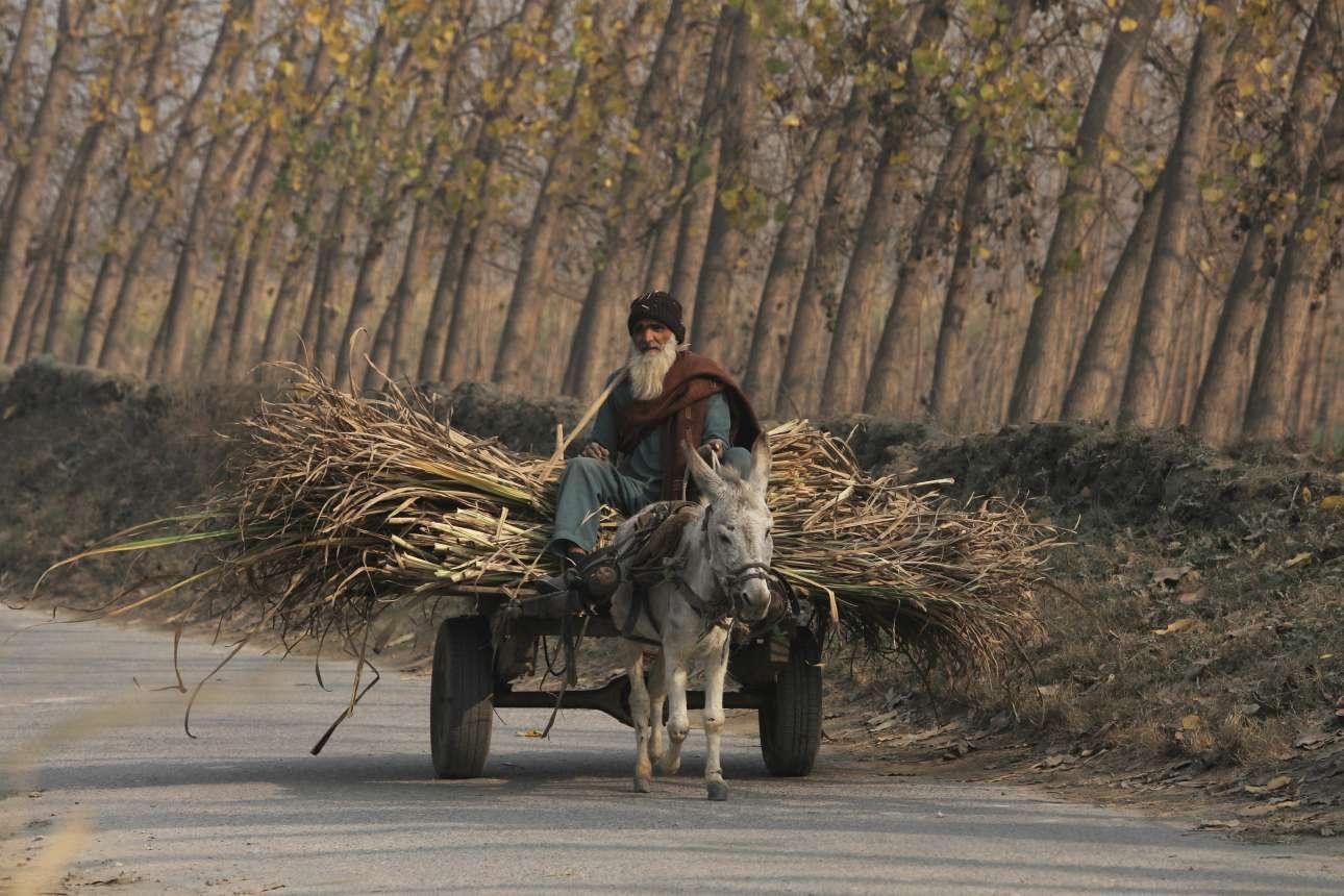 Τετάρτη, 2 Ιανουαρίου, Πακιστάν. Ηλικιωμένος μεταφέρει ζαχαρότευτλα σε δρόμο στα προάστια της Πεσαβάρ