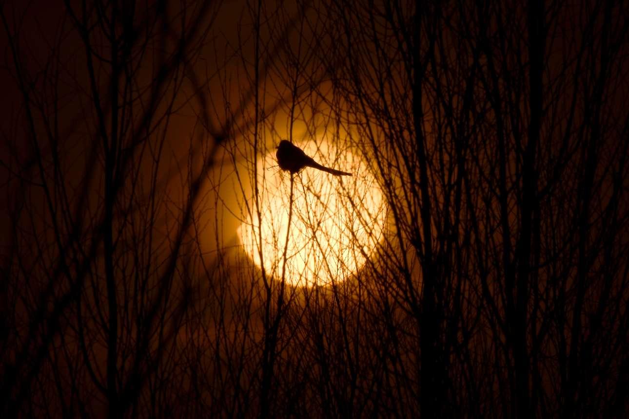 Κυριακή, 6 Ιανουαρίου, Κίνα. Η σιλουέτα ενός πουλιού διακρίνεται μπροστά από τον Ηλιο στη Γιντσουάν, στη βόρεια Κίνα. Είναι η πρώτη μερική έκλειψη Ηλίου του 2019