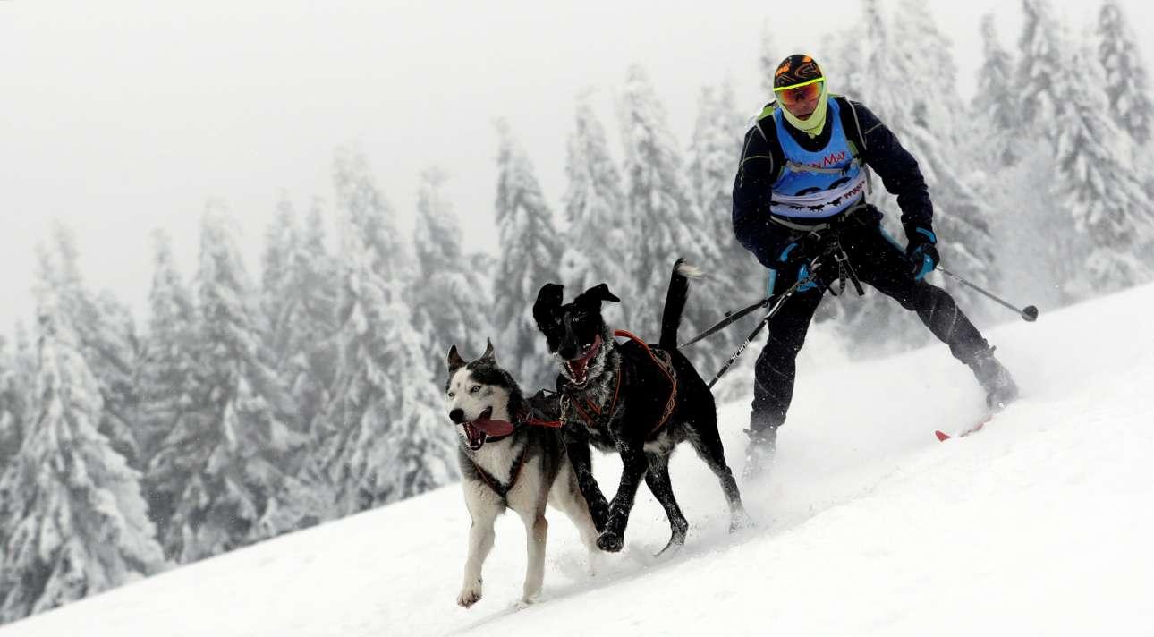 Σκιέρ με σκυλιά συμμετείχαν επίσης στον αγώνα