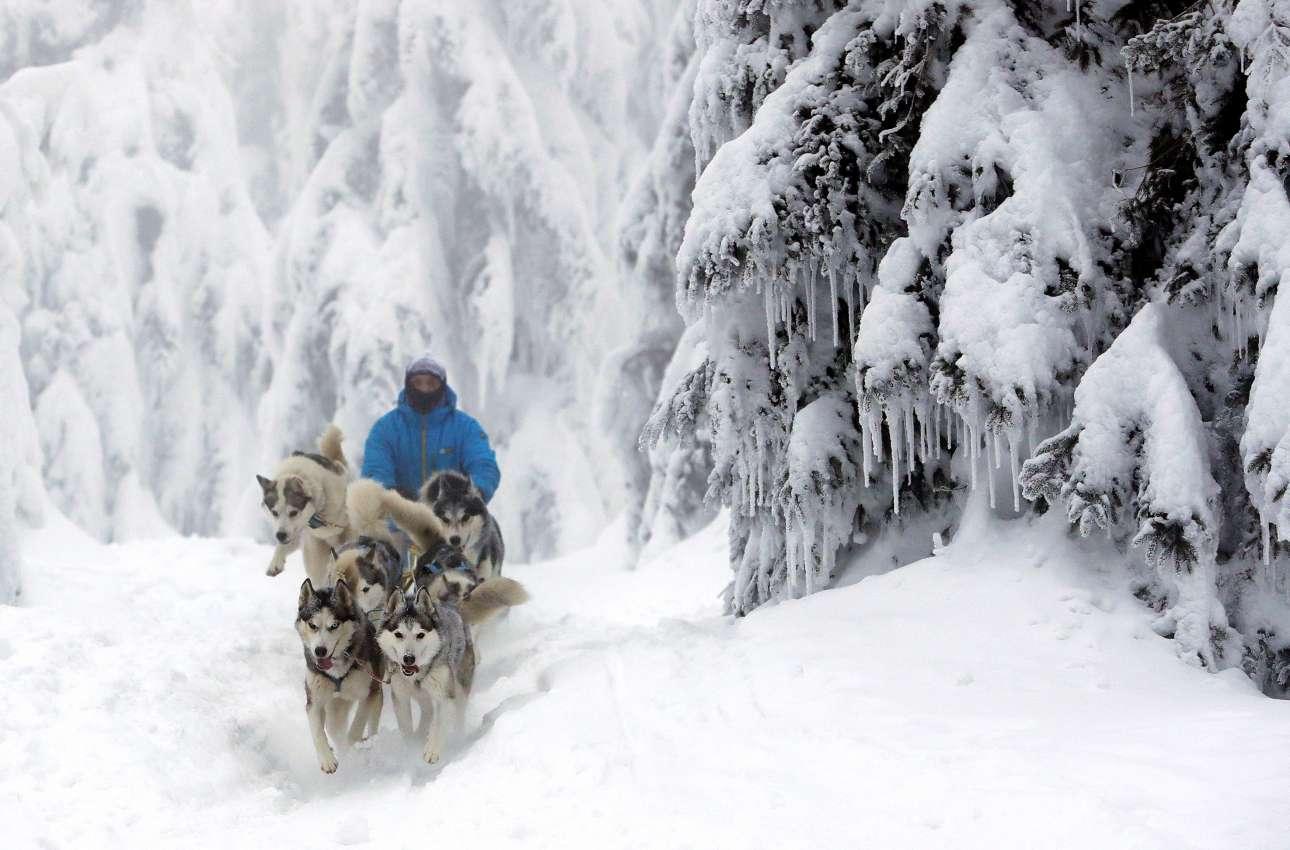 Ενας musher οδηγεί το έλκηθρό του μέσα σε παχιά στρώματα από χιόνι