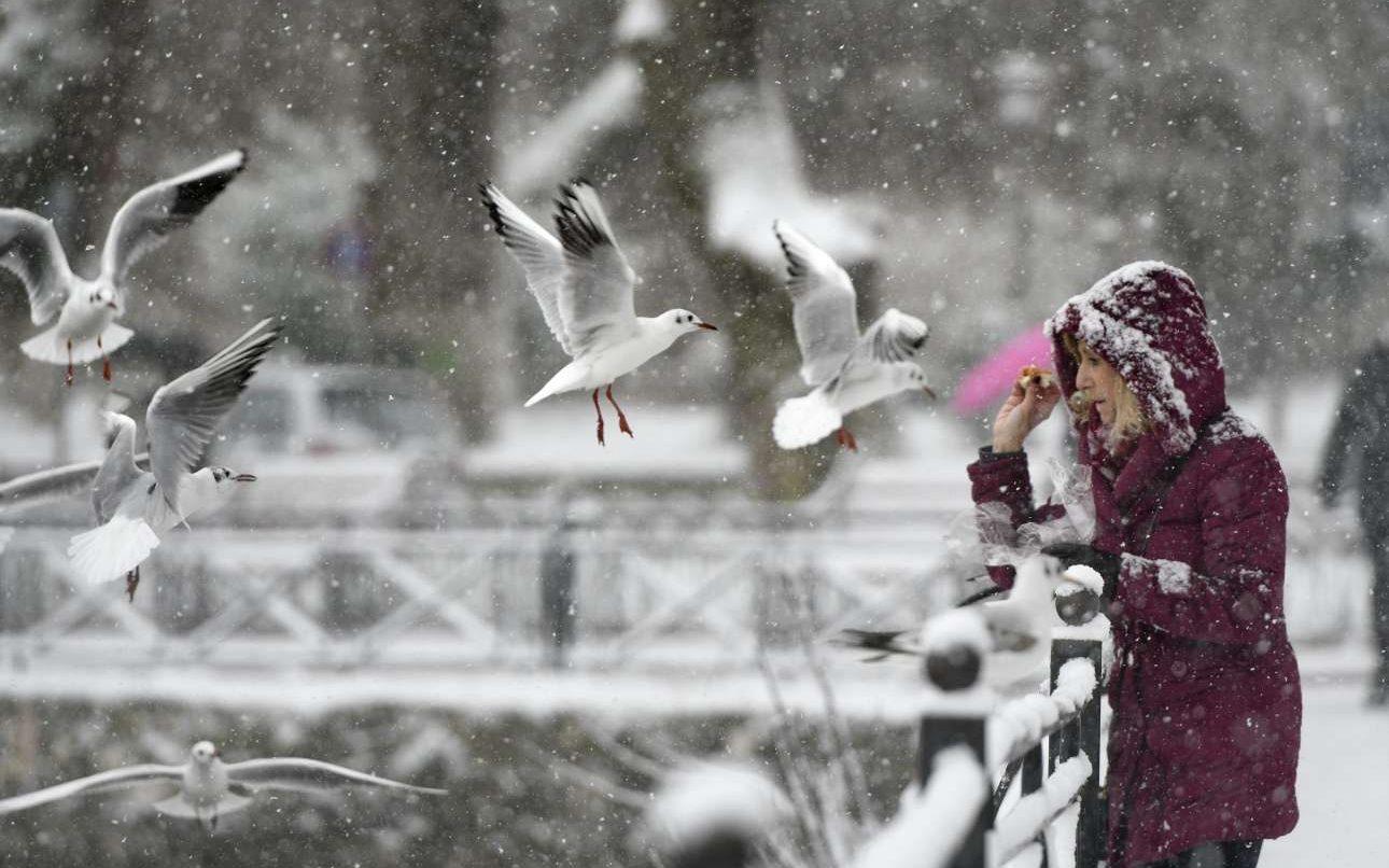 Παρασκευή, 4 Ιανουαρίου, Ελλάδα. Μία γυναίκα ταΐζει τα πουλιά στην χιονισμένη λίμνη των Ιωαννίνων