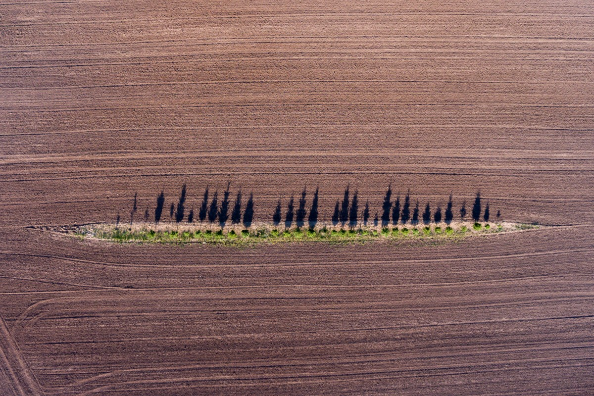 «Πρόσφυγες» είναι ο τίτλος της φωτογραφίας που μοιάζει με έργο αφηρημένης τέχνης και απεικονίζει μοναχικά δέντρα σε χωράφι