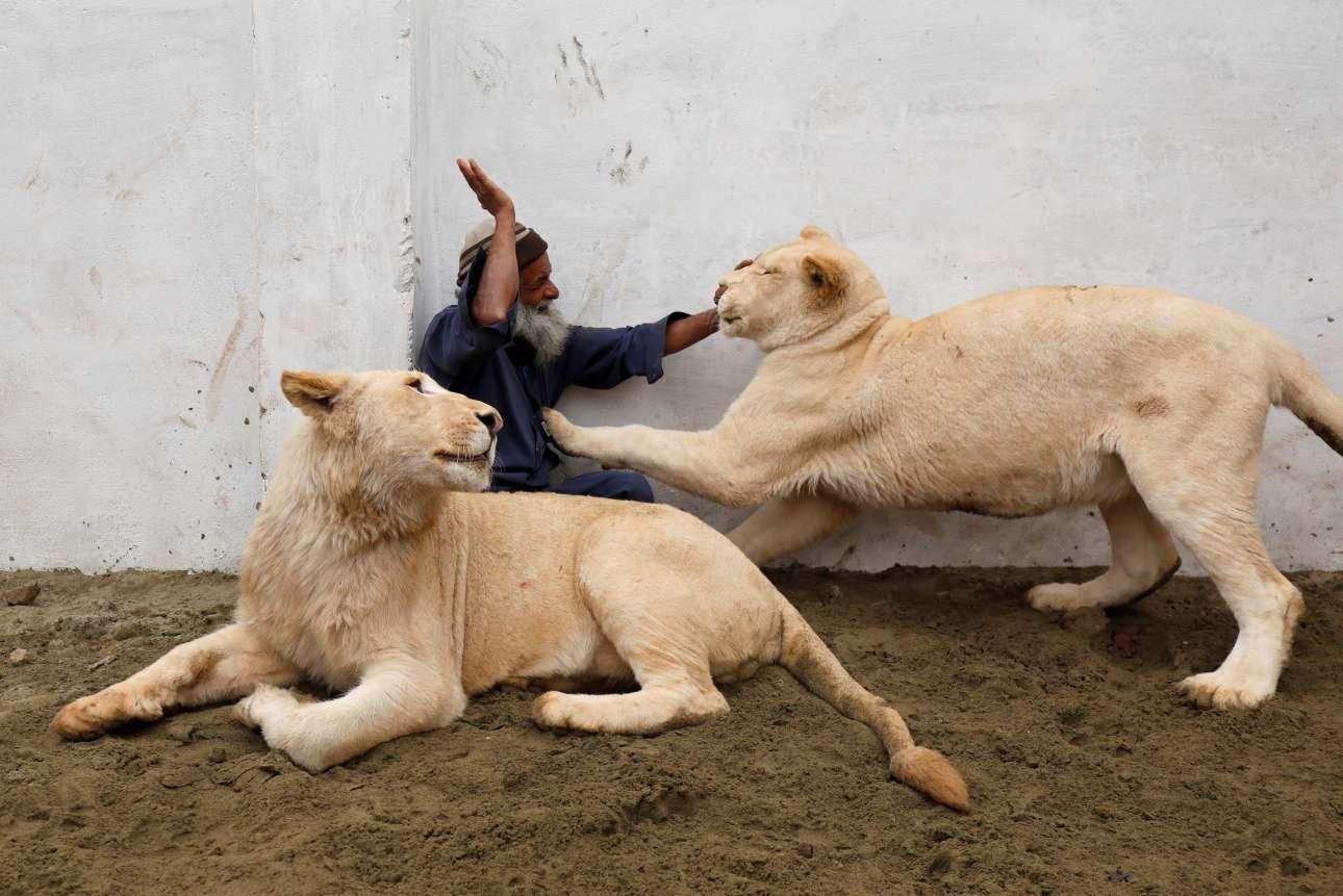 Τρίτη, 5 Φεβρουαρίου, Πακιστάν. Επιστάτης παίζει με δύο μικρά λιονταράκια σε περιφραγμένο χώρο σπιτιού σε προάστιο της πόλης Πεσαβάρ