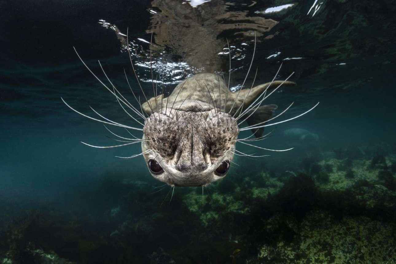 Στο αρχιπέλαγος τον βρετανικών νησιών Φαρν, οι χαριτωμένες φώκιες ζουν προστατευμένα και ειρηνικά μαζί με ανθρώπους, προσελκύοντας τουρίστες στην περιοχή
