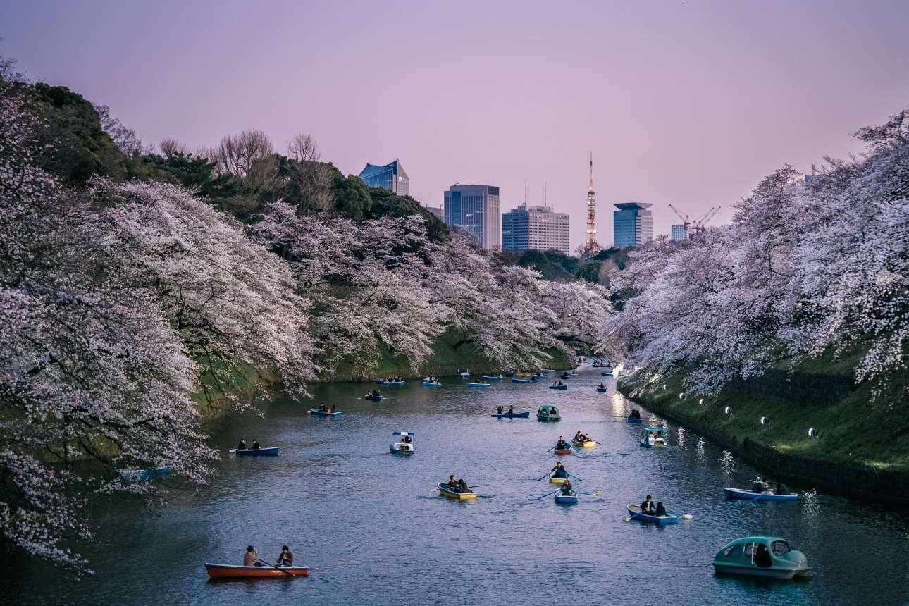 «Αστική Φύση». «Αρμονική συνύπαρξη πόλης και φύσης, μοντέρνου και ιστορικού, ανθρώπου και περιβάλλοντος στο πάρκο Chidorigafuchi, την εποχή των ανθισμένων κερασιών. Μία μοναδική συνύπαρξη που συναντά κανείς μόνο στο Τόκιο» γράφει ο βρετανός φωτογράφος