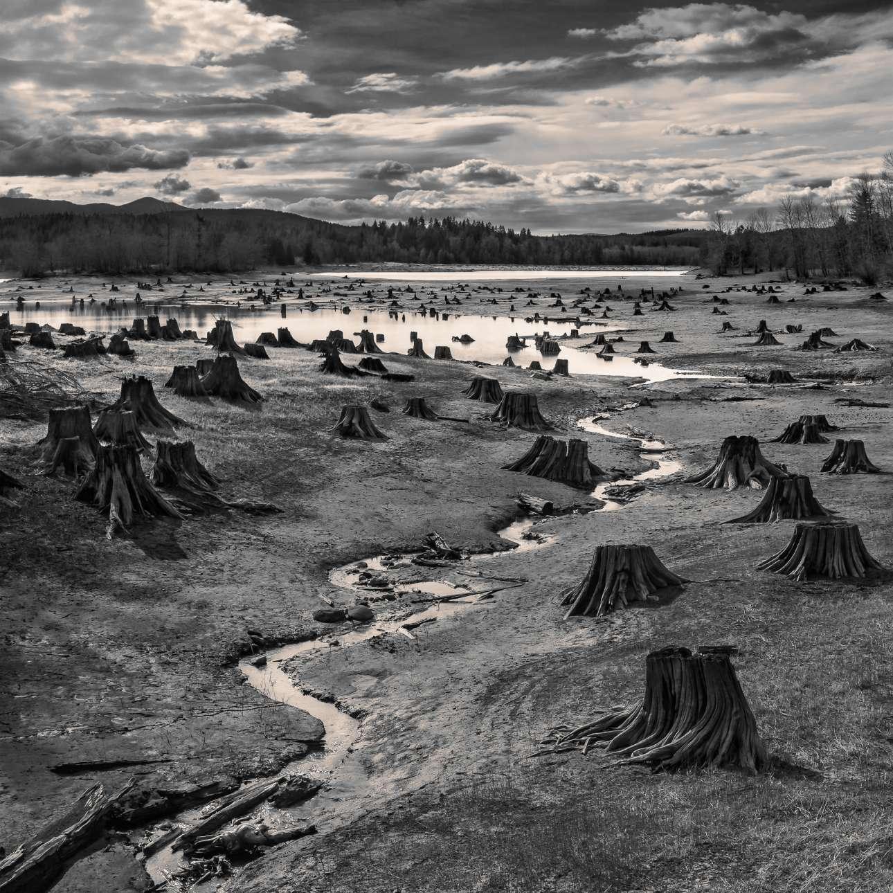 Πρώτη θέση στην κατηγορία Τοπίο. Καθώς η στάθμη του νερού πέφτει, κομμένοι κορμοί δέντρων ξεπροβάλλουν από την τεχνητή λίμνη Αλντερ στην Ουάσινγκτον
