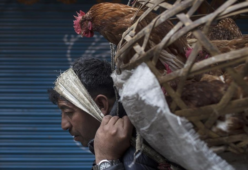 Τρίτη, 19 Φεβρουαρίου, Νεπάλ. Ενας άνδρας μεταφέρει μια κότα στην αγορά του Κατμαντού