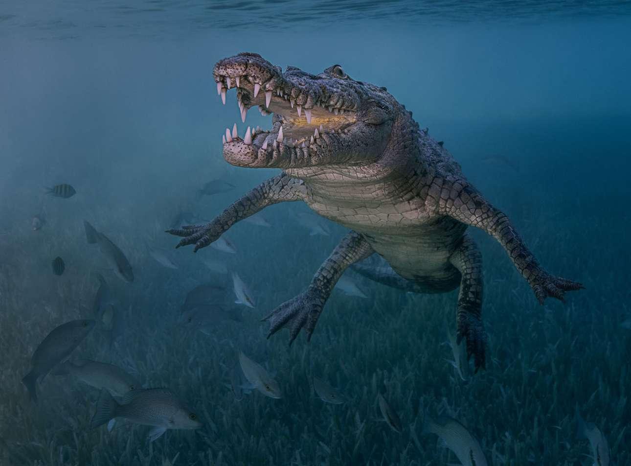Δεύτερη θέση στην κατηγορία Αρχάριος DSLR. O κροκόδειλος Ελ Νίνο χαμογελάει πλατιά στην κάμερα, στην Κούβα