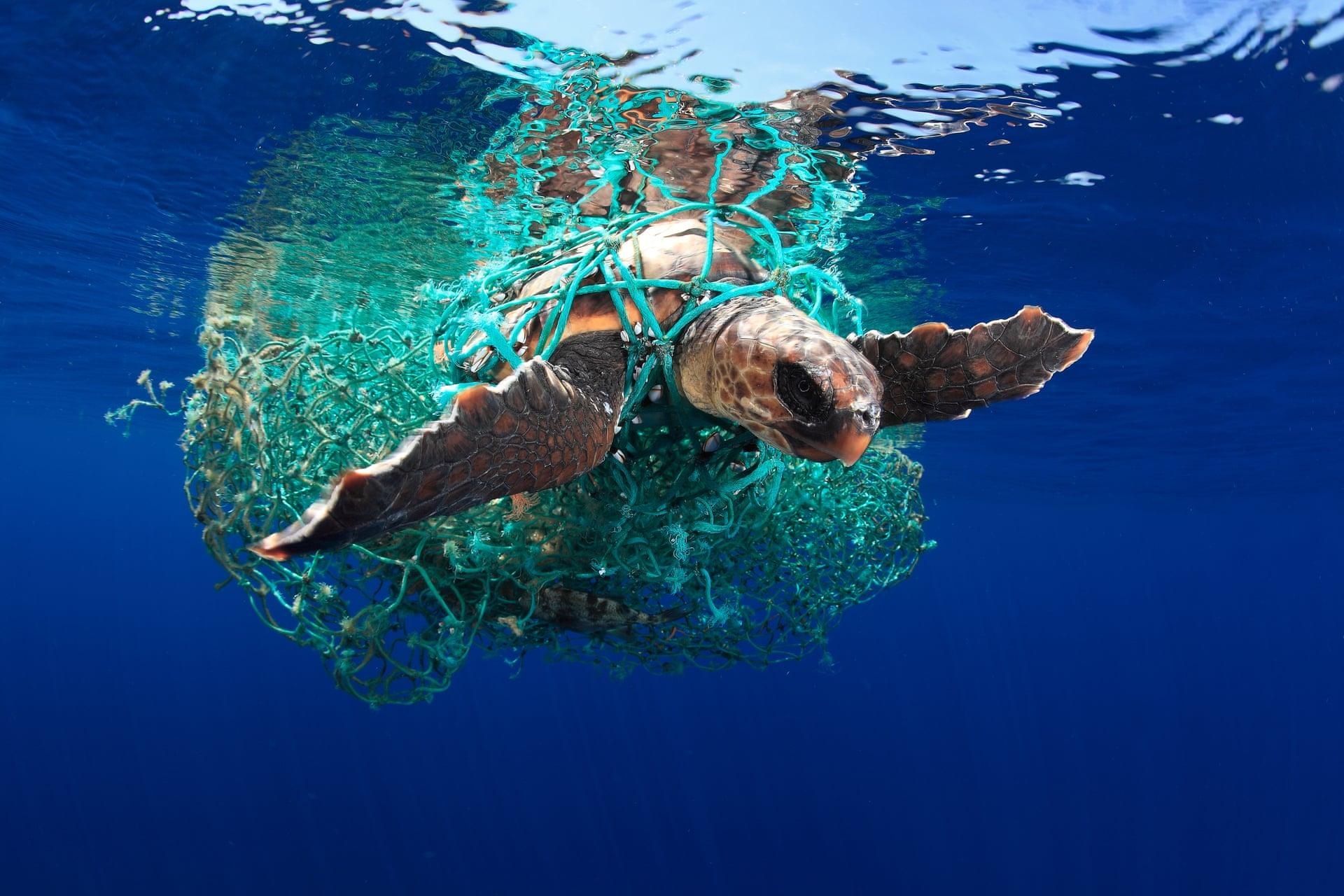 Η χελώνα καρέτα-καρέτα: Νικητής στην κατηγορία «Διαφύλαξη της θαλάσσιας ζωής». «Οι χελώνες καρέτα-καρέτα φτάνουν στα Κανάρια Νησιά από τις ακτές της Καραϊβικής. Πολλές φορές αιχμαλωτίζονται σε πλαστικά ή δίχτυα ψαράδων όπως αυτή της φωτογραφίας, η οποία στάθηκε τυχερή γιατί βρεθήκαμε στο διάβα της και την ελευθερώσαμε».
