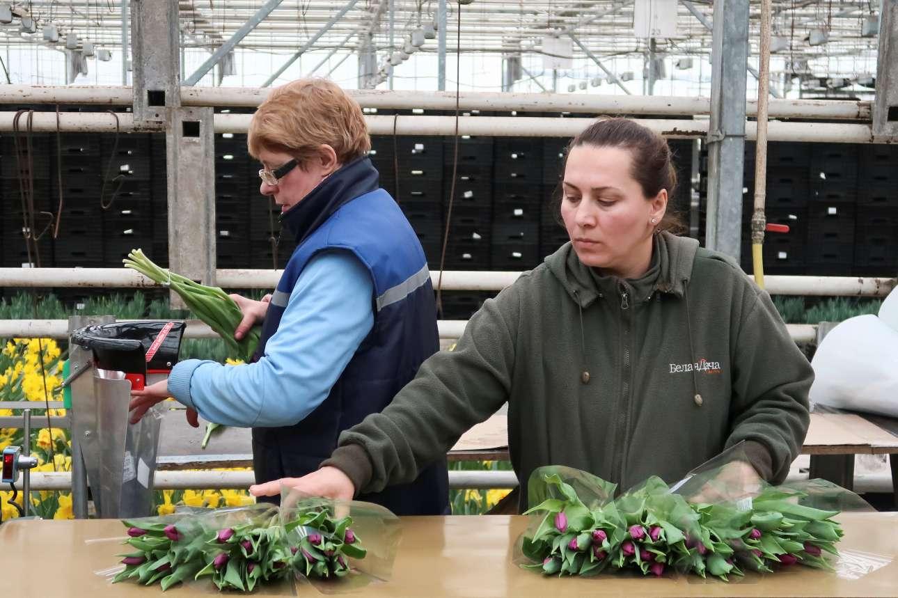 Εργαζόμενες σε ανθοκήπιο της Μόσχας ετοιμάζουν τις ανθοδέσμες για τον εορτασμό της ημέρας, κατά την οποία, οι πωλήσεις λουλουδιών στη Ρωσία «εκτοξεύονται»