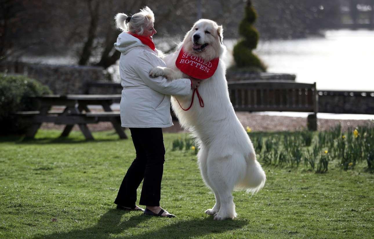 Μία ακόμα απόδειξη ότι τα σκυλιά αρχίζουν να μοιάζουν με τους«γονείς» τους, όσο περνάει ο καιρός... Στη φωτογραφία ένας πελώριος Ορεινός Σκύλος των Πυρηναίων «χορεύει» με την ιδιοκτήτριά του, Σούζαν Ράιλι