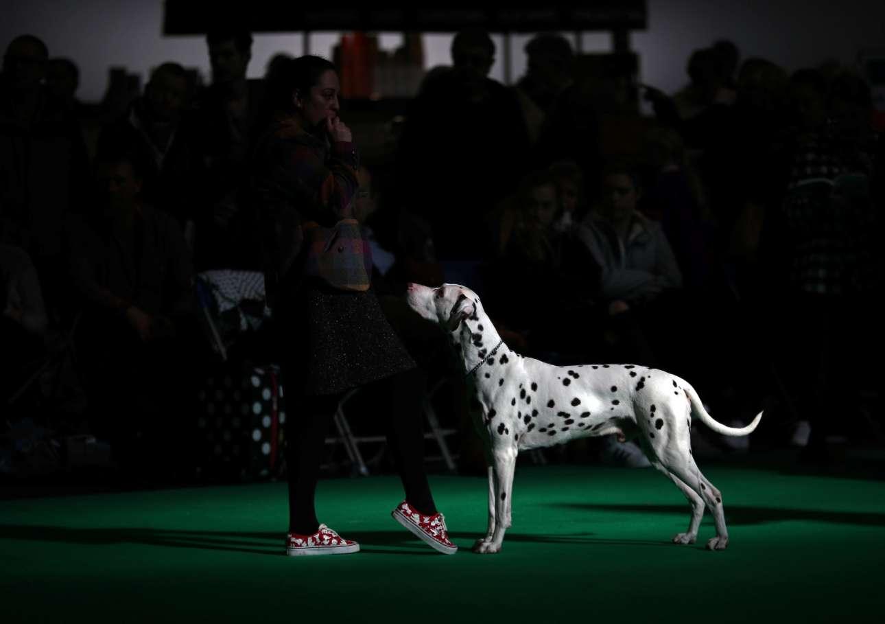 Ενα σκυλί Δαλματίας στον αγωνιστικό χώρο, δίπλα στην αγχωμένη ιδιοκτήτριά του