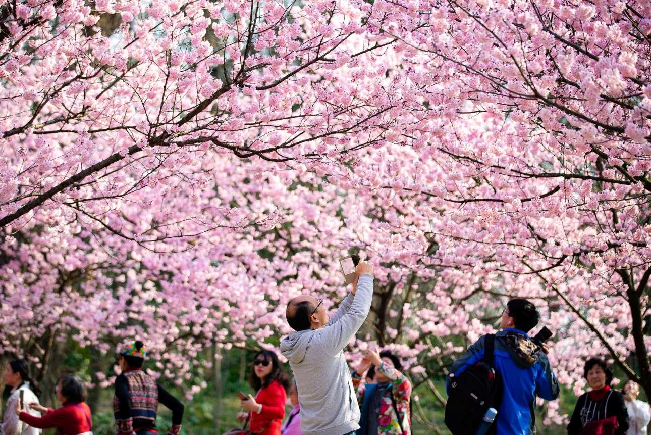 Παρασκευή, 15 Μαρτίου, Κίνα. Επισκέπτες φωτογραφίζουν τις ανθισμένες μυγδαλιές στην Ναντσίνγκ