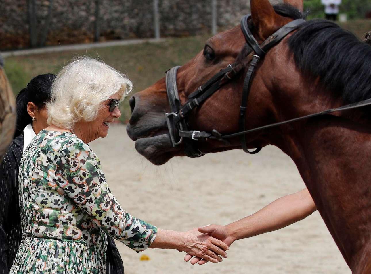 27 Μαρτίου: η Καμίλα και το άλογο - στιγμιότυπο από την επίσκεψη της δούκισσας της Κορνουάλης στον Ιππικό Ομιλο της Αβάνας
