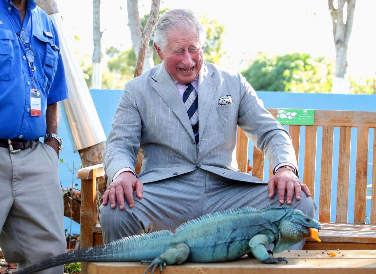 Παρασκευή, 29 Μαρτίου, Νησιά Κέιμαν. O πρίγκιπας Κάρολος διασκεδάζει βλέποντας από κοντά ένα μπλε ιγκουάνα σε πάρκο στο Γκραντ Κέιμαν