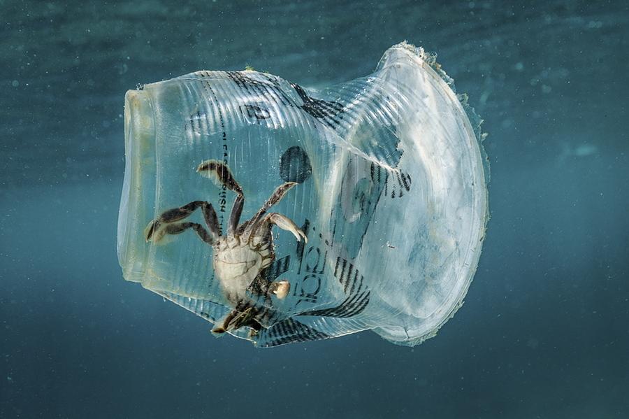 Τρίτη, 12 Μαρτίου, Φιλιππίνες. Μία φωτογραφία και ένα δυνατό οικολογικό μήνυμα. Καβούρι εγκλωβισμένο μέσα σε πλαστικό ποτήρι στα ανοιχτά του κόλπου Μπατάνγκας