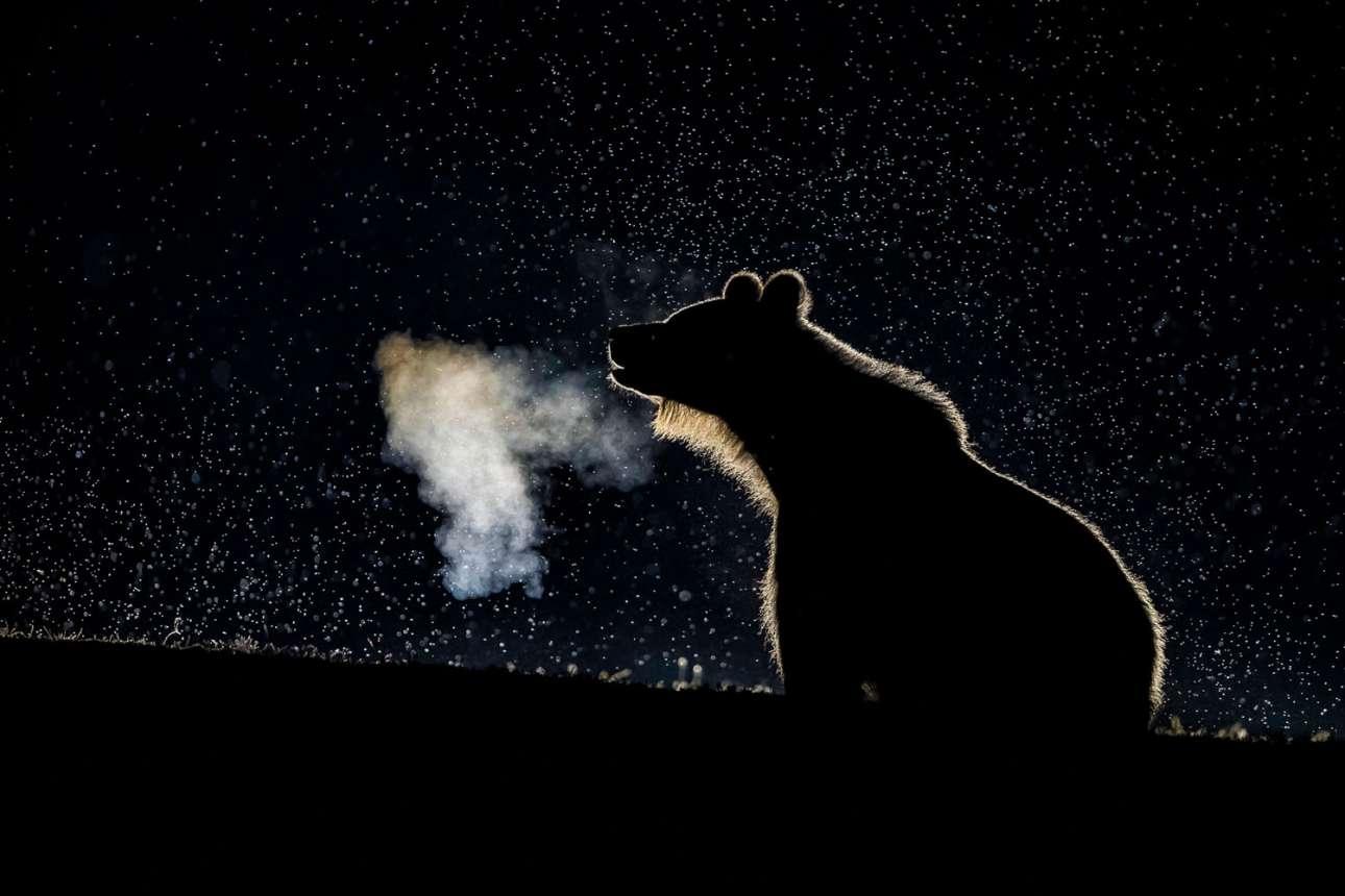 «Αρκουδάκι», κατηγορία Φυσικός Κόσμος. Μικρή αρκούδα με φόντο μία ομιχλώδη νύχτα στη Χαργκίτα της Ρουμανίας, σε ένα ατμοσφαιρικό καρέ