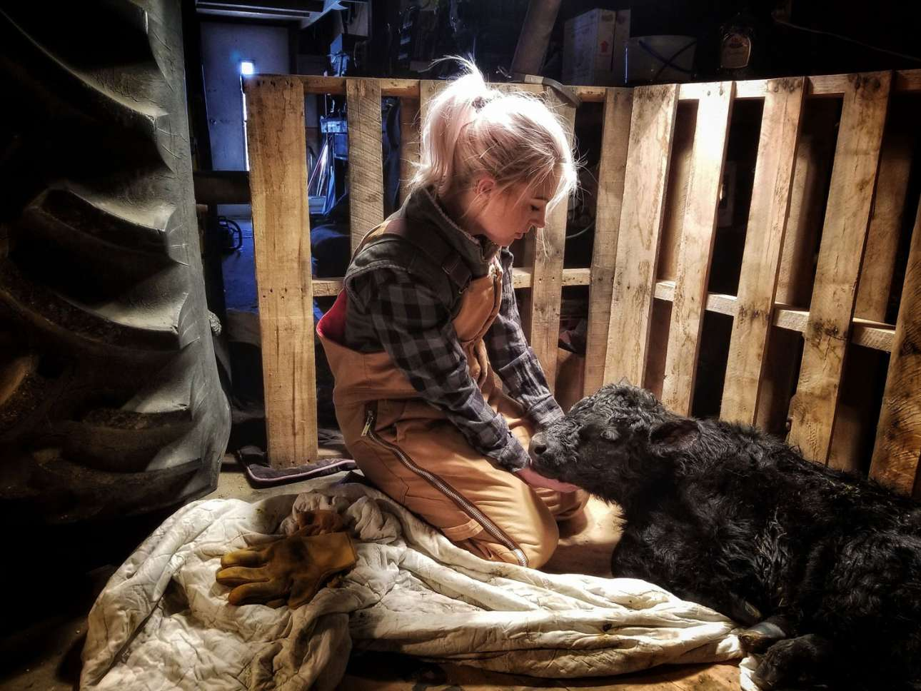 «Φύλακας Αγγελος», κατηγορία Αμερικανική Εμπειρία. Το κοριτσάκι φροντίζει με τρυφερότητα και αγάπη ένα νεογέννητο μοσχαράκι μετά από δύσκολο τοκετό, στη φάρμα του πατέρα της. στη Νεμπράσκα